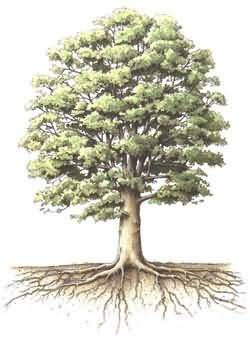 Arbol Genealogico Obama Group Picture Image Tag